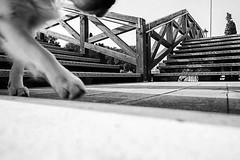 2016♠169 (ruggeroranzani_RR) Tags: digital blackandwhite leicame voigtlanderultron28mmf2 dog bridge venice ratseyeview