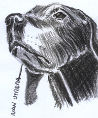 perro a carboncillo (ivanutrera) Tags: draw dibujo dibujoacarboncillo charcoal perro dog canino animal drawing carboncillo sketch sketching