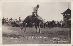 Cowboys Cowgirls & Rodeo RPPC c.1918 COWBOY RIDER TEGLAND riding hard BAREBACK Photographer FOSTER Miles City Montana Photo H-11 (UpNorth Memories - Donald (Don) Harrison) Tags: vintage antique postcard rppc don harrison upnorth memories upnorth memories upnorthmemories michigan history heritage travel tourism michigan roadside restaurants cafes motels hotels tourist stops travel trailer parks campgrounds cottages cabins roadside entertainment natural wonders attractions usa puremichigan