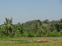 DSC05321.jpg (J0celyn79) Tags: asie bali indonésie karangasem id