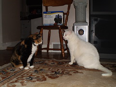 Autumn and Mystic (universalcatfanatic) Tags: wood pink autumn orange cats brown white black kitchen television tongue cat out carpet nose living wooden tv chair sitting room entrance lick tortoiseshell her sit calico speaker his rug stick tortie licking mystic sticking