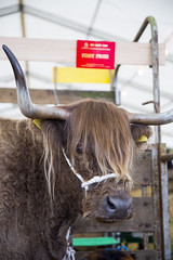 Kent_County_Show_2014_Highlights_008