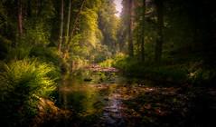 Lydford Gorge (David Haughton) Tags: lydford lydfordgorge dartmoor devon warm river stream green trees nationaltrust park woodland summer beautiful