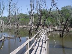 Tisza Backwater of Mrtly, Hungary (Norbert Bnhidi) Tags: hungary mrtly bridge lake ungarn hungra hongrie ungheria hungria hongarije  magyarorszg