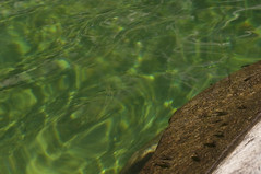 (www.tokil.it) Tags: torrentesessera trivero biella italia italy alpipennine penninealps montagna mountain natura nature torrente creek macro acqua water trasparente transparent pulita clean chiara clear rocce rocks girini tadpoles piccoli little animali animals nikond90