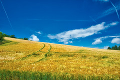 From Bohemian and Moravian Fields II. Beautiful Morning in South Moravia (Petr Horak) Tags: summer colour tree field clouds landscape photography europe horizon farmland czechrepublic agriculture agricultural floriculture