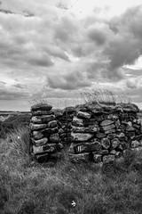 KeighleyMoor_23 (atkiteach) Tags: blackandwhite rural pen walking bradford sheep moors fold westyorkshire dogwalking moorland penfold keighley keighleymoor hiddenbradford hiddenbradfordyorkshire