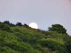 hillside (mark.griffin52) Tags: england buckinghamshire cheddington countryside hillside trees copse fullmoon moonrise moon