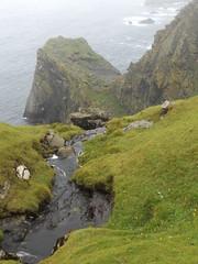 Cliffs at Hermaness, Unst, Shetland, 19 July 2016 (AndrewDixon2812) Tags: hermaness unst shetland burrafirth cliff waterfall stream headland