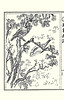 Silktree and unknown birds (Japanese Flower and Bird Art) Tags: flower silktree albizia julibrissin fabaceae bird katsugoro inoue nihonga intaglio picture book japan japanese art readercollection