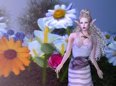 The Memory of Daisies, 2 (gwen.enchanted) Tags: maitreya catwa analogdog bentbox soul brynoh indieteepee frolic silvanmoondesigns thesecretaffair 187