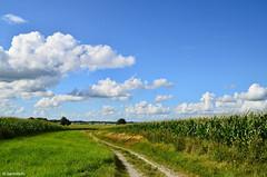Feldweg in der Zeteler Marsch / Landkreis Friesland (berndwhv) Tags: felder mais maisfeld weg wege feldweg wolken landscape landschap deutschland niedersachsen landkreisfriesland zetel zetelermarsch norddeutschland