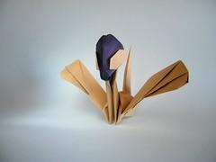 Zorgrue - Eric Vigier (Rui.Roda) Tags: origami papiroflexia papierfalten zorg eric vigier