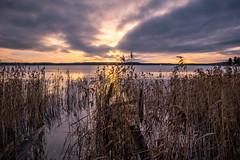 Away (Jens Haggren) Tags: olympus em1 sun sunrise morning sky clouds sea seascape water reflections reed light landscape nacka sweden