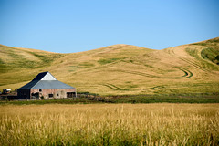 The hysterical family eliminates the opinion. (TheRealMichaelMoore) Tags: 2016 colfax palouse washington barn farm fields hills landscape wheat unitedstates nature