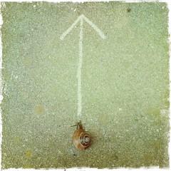 slowing down (saffraanenviolet) Tags: snail animal zen time flickrfriday passthetime flfrok