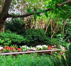 secret garden (ekelly80) Tags: dc washingtondc july2016 summer dupontcircle cosmosclub garden green flowers secretgarden hiddengarden