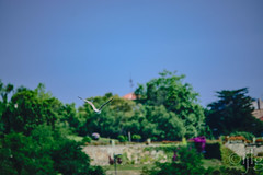 24072016DSC_0241.jpg (Ignacio Javier ( Nacho)) Tags: naturea gaviotas aves facebook flickr faunayflora