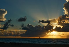 sunrise (CU TEO MD) Tags: sunrise summer sun clouds sunray saltwater water sea ocean bird thewildlife wildlife ngc twop soe artofimages simplysuperb sony a6300 explore travel vacation miami florida