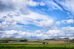 The Final Frontier (Andreas Voigt Photography) Tags: blumenundpflanzen green landschaft ostsee rgen sommer urlaub animals clouds lamb shadows sky