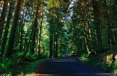Where the road takes me... (julesbailleul) Tags: landscape paysage adventure beach cannon car forest lights oregon road slience trip winding