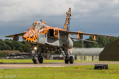 Jaguar GR3 'Spotty Jag' - RAF Cosford 238 Squadron Jaguar Retirement Day (harrison-green) Tags: jaguar gr3 raf royal air force cosford sepecat retirement end an era canon eos 700d sigma 18250mm op granby spotty jag special paint scheme aircraft aviation 238 squadron