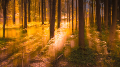 In The Woods (explored) (marco soraperra) Tags: trees wood landscape light sun backlight yellow orange green verde shadow doubleexposure explore explored artistic abstract sunset september nature forest