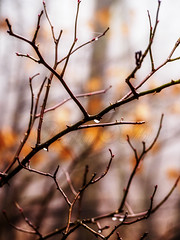 sz (Delfinibi) Tags: hungary ungarn magyarorszg mzuiko zuiko olympusepl5 olympus outdoor sz autumn nature natur natural nvny termszet erd forest orange 100v10f