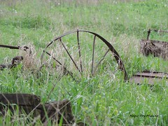 ~Life in General~ 15.05.19 (~Life in General~) Tags: old plants grass weeds pieces outdoor antique parts feild farmmachinery steelwheel