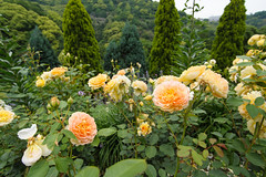 20150523-DS7_0714.jpg (d3_plus) Tags: street bridge sea sky plant flower building nature japan garden walking spring scenery bokeh outdoor fine wideangle daily architectural bloom  streetphoto   shizuoka    dailyphoto  izu  atami thesedays superwideangle    fineday      tamron1735   a05    tamronspaf1735mmf284dildasphericalif  tamronspaf1735mmf284dildaspherical architecturalstructure d700    nikond700 tamronspaf1735mmf284dild tamronspaf1735mmf284  nikonfxshowcase