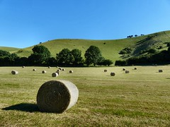 Early harvest (sunset1uk) Tags: england tree shadows westsussex harvest bluesky fields bale southdowns downland edburton poynings