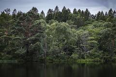 jersj (anek07) Tags: lake tree green rain pinetree woodland reflections mirror cloudy outdoor branches pinewood summerrain woodlandlake jersj