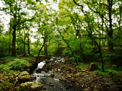 Stream through the trees (Jessicasnapshots) Tags: trees stream stones magical green forest water walks peaceful calming