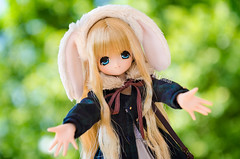 Anyone needs a hug? (Alix Real) Tags: azone azonedoll doll dolls anime manga kawaii girl komorebi animal forest miu excute ex cute pure neemo pureneemo s rabbit bunny azoneint azonejp