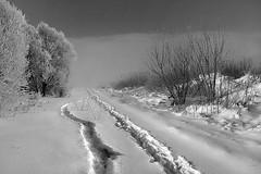 Tracce (Zz manipulation) Tags: art ambrosioni zzmanipulation inverno winter neve tracce orme bosco manto