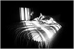 It's all about the light | 232/366 (emrold) Tags: 19aug16 366the2016edition 3662016 day232366 bw niksilverefex toronto bed contrast hotelroom light lightshaft pattern shadows sheets lensblr 2016ericdelorme|emrold xf16mmf14rwr photographersontumblr fujifilmxt1