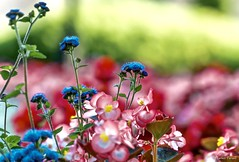 Colorful World .. (tferi666) Tags: ngc planet colorful flower nice sony ilce next a6300 hungary magyar srospatak epz18105mm sonyflickraward sonyflickrawardgold