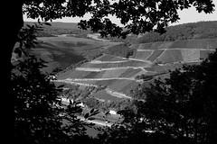 a day in the woods II | Ein Tag im Wald II (rainbowcave) Tags: assmannshausen rhein weinberge damianskopf bingen wald druidenberg kreuzbachtal rheintal aussichtspunkt overlook rhine forest woods rhinevalley vineyards