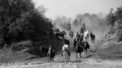 In Riding A Horse... (It Feels Like Rain) Tags: horse horses equine blackandwhite cowboys ramuda cheval caballo