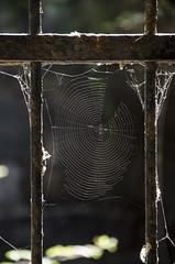 (nuriapase) Tags: illeselies lipari sicilia italia nature natura teranyina spiderweb spider telaraa araa contrallum contraluz backlighting light llum luz frame encuadre enquadrament reixa reja grille