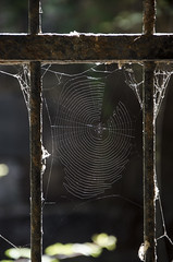 (nuriapase) Tags: illeseòlies lipari sicilia italia nature natura teranyina spiderweb spider telaraña araña contrallum contraluz backlighting light llum luz frame encuadre enquadrament reixa reja grille