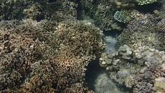 DJIBOUTI (41 of 88) (GregoireDubois) Tags: djibouti nature sea diving wildlife corals