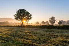 Tree sunrise (Sebo23) Tags: tree baum sunrise sonnenaufgang espasingen morgenlicht morgenstimmung morninglight morgennebel licht lichtstimmung gegenlicht light sunbeams sunstar canon6d canon24704l
