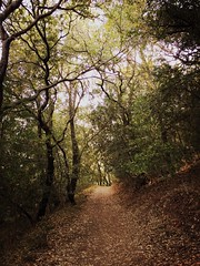 Spring Lake Regional Park in Sonoma County, California. (harminder dhesi photography) Tags: jane rijks hipstamatic bayarea norcal santarosa california sonomacounty sonoma trail summer park trees nature outdoors hiking landscape