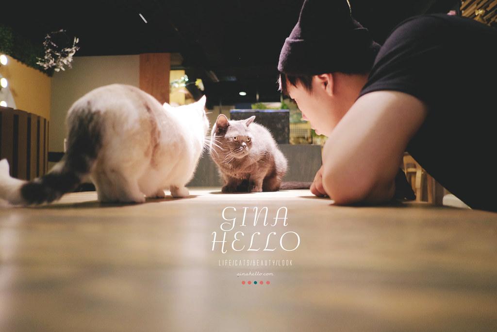 日本貓咖啡 美國村 貓的時間