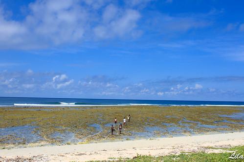 Rote Island :Boa still small