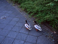 Walking and talking (miguel_m83) Tags: leica 35mm 14 ct mc epson 100 v600 agfa m2 nokton voigtlnder precisa