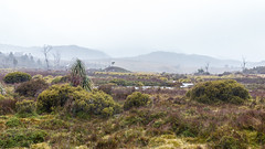 50 shades of green (sandergroffen) Tags: cloudy australia places rainy tasmania bewolkt regen australie conditions cradlemountain australi tasmanie cradlemountainnp omstandigheden weatherconditions ronnycreekcarpark