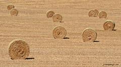 7 DSC_0035b (Pep Companyó - Barraló) Tags: camp rural de catalunya bales solsones palla lleida cardener paisatge josep clariana rodones companyo barralo