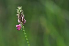 Flower (inge_rd) Tags: blte flower bokeh